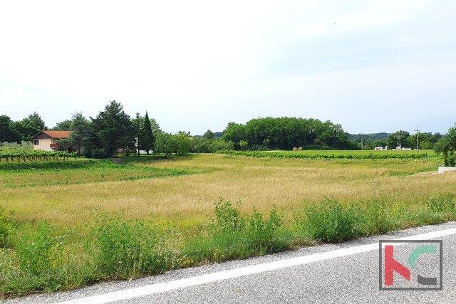 Građevinsko zemljište 423m2 na mirnoj lokaciji Istre (Gračišće)