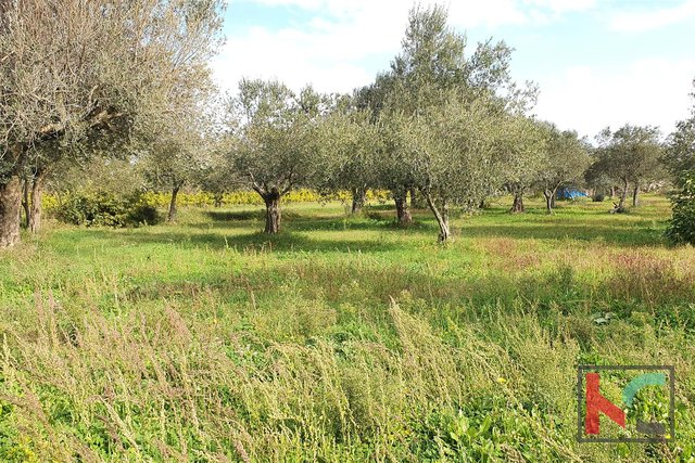 Istria - Vodnjan II Galižana, olive grove 2000m2