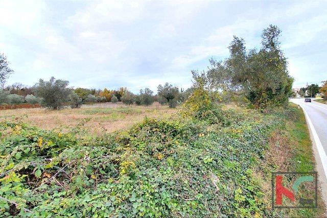 Istra - Bale, atraktivno zemljište, maslinik 7233m2 sa ucrtanim objektom, uz prometnicu