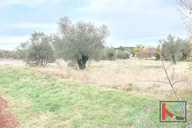 Istria - Bale, attractive land, olive grove 7233m2 with a plotted object, along the road