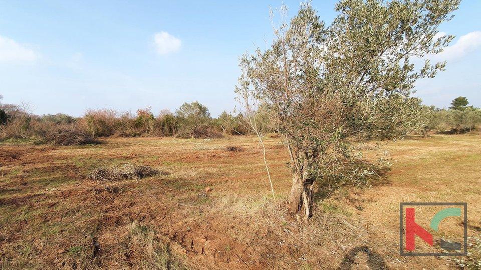 Istra - Fažana, weekend zemljište 516m2 - voda na terenu