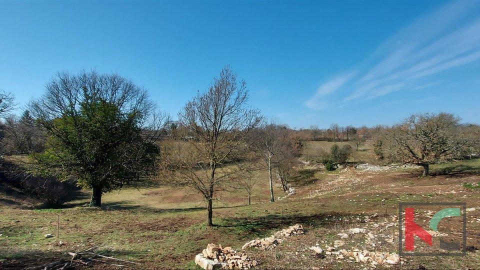 Istra, Svetvinčenat,  građevinsko i poljoprivredno zemljište 9010m2