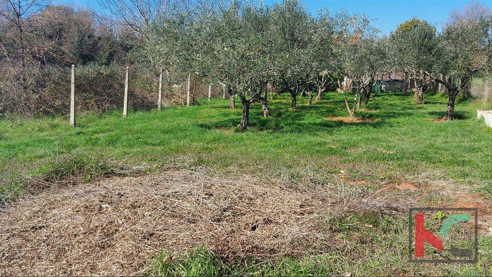 Istria, Banjole, Volme agricultural land 640m2