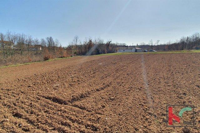 Istria - Svetvincenat, terreno agricolo edificabile combinato 3369m2