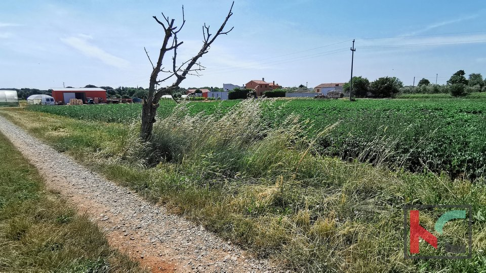Istra, Šišan građevinsko zemljište 1268m2