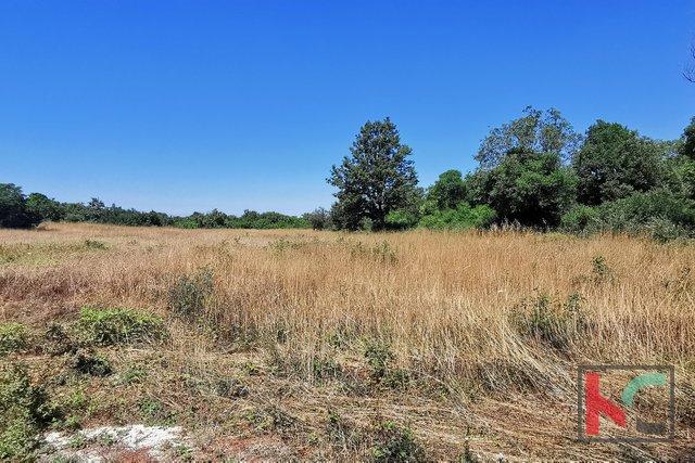 Istra, Ližnjan, Šišan, kmetijsko zemljišče 400-505m2
