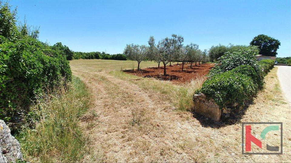 Istria, building land 683m2 great location near Svetvincenat