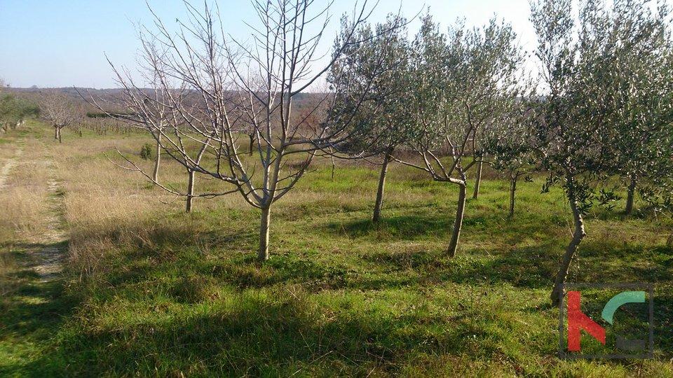Land, 1500 m2, For Sale, Vodnjan