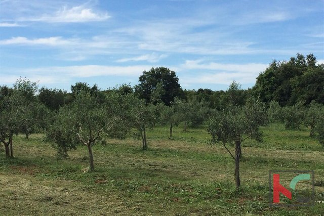 Vodnjan, Olivenhain 7400 m2, 180 Olivenbäume
