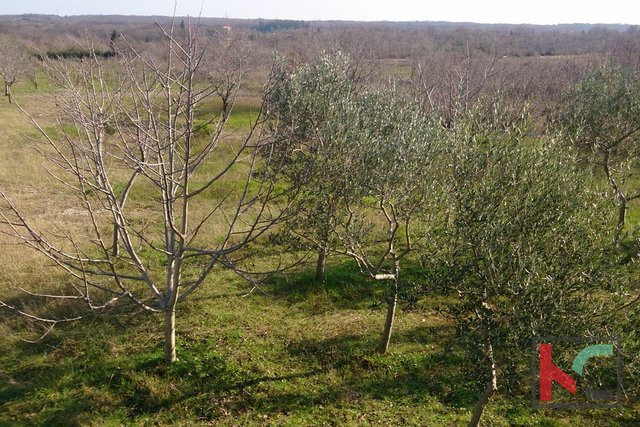 Land, 4510 m2, For Sale, Vodnjan