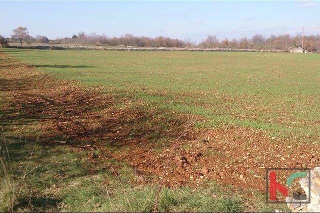 Land, 13055 m2, For Sale, Vodnjan