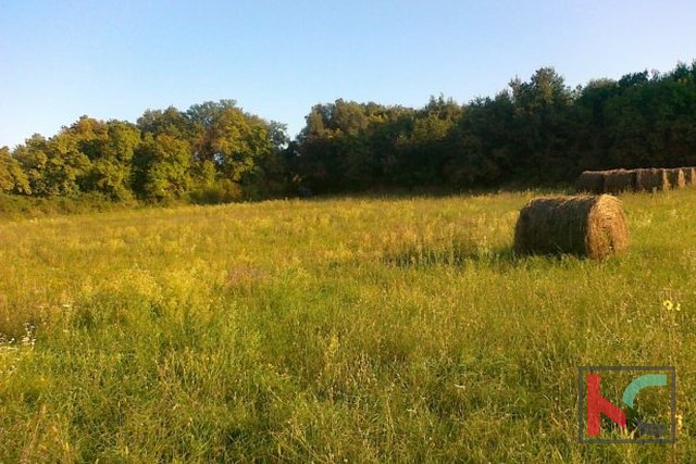 Weekend terreni a Ližnjan, 5072 m2 e 5 x circa 410 m2