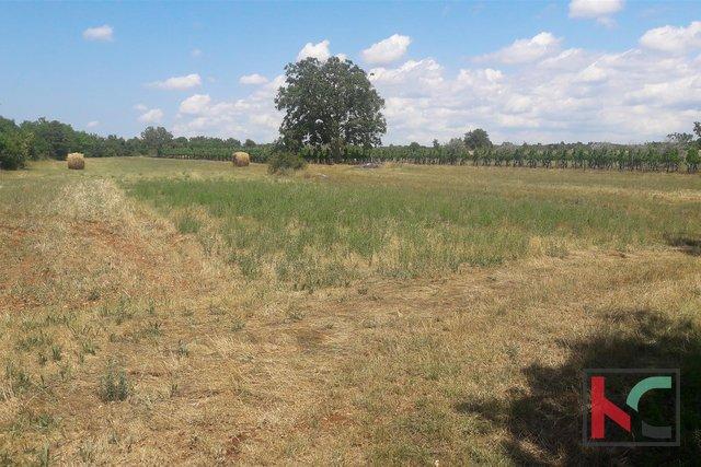 Istra, Svetvinčenat građevinsko i poljoprivredno zemljište 9577m2