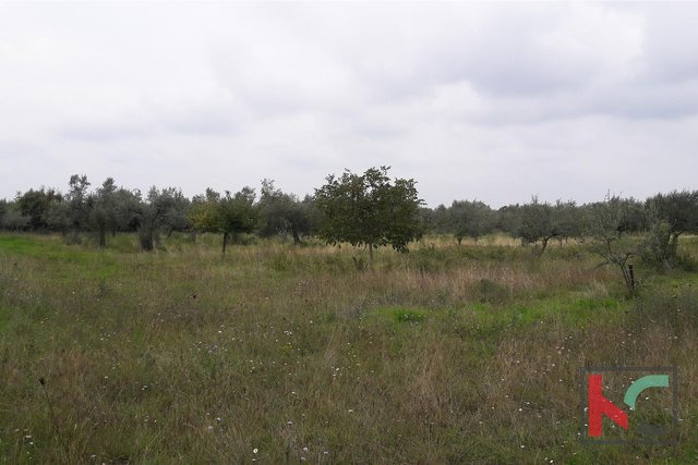 Bale, agricultural land 16169m2, olive grove with sea view