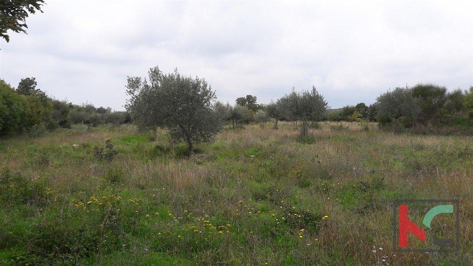 Bale, Ackerland 16169m2, Olivenhain mit Blick auf das Meer