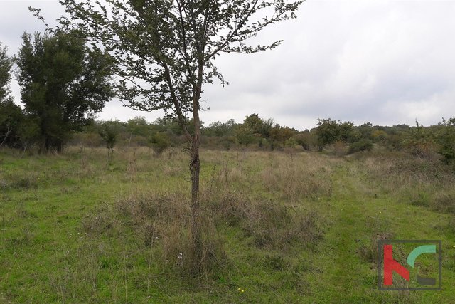 Bale, agricultural property 21297m2 with a plot of 68m2
