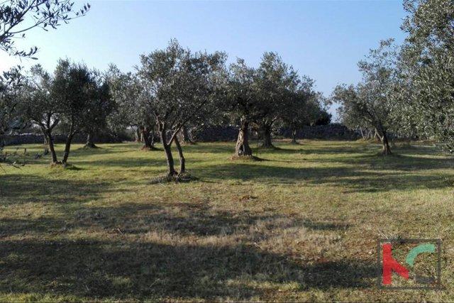 Barbariga, Batvaci Olivenhain Land 3701m2